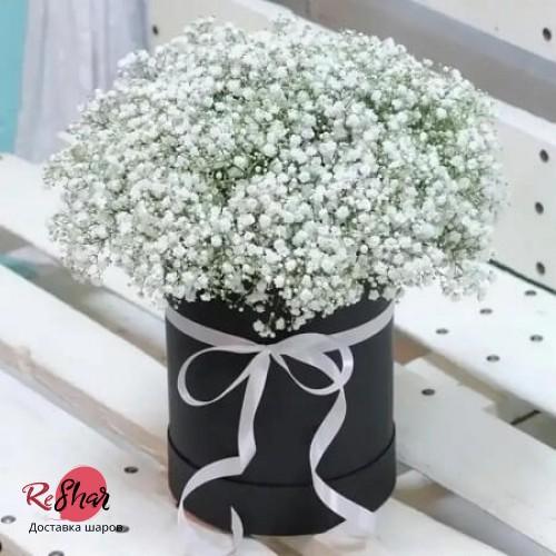 Цветы в чёрной коробке, Гипсофила №1